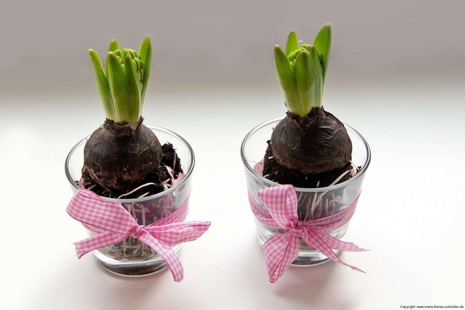 hyazinthen vasen marie theres schindler beauty blog. Black Bedroom Furniture Sets. Home Design Ideas