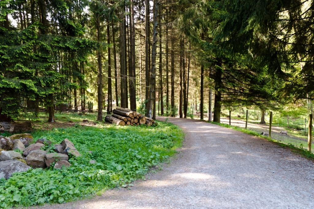 Wildpark-Gersfeld-12