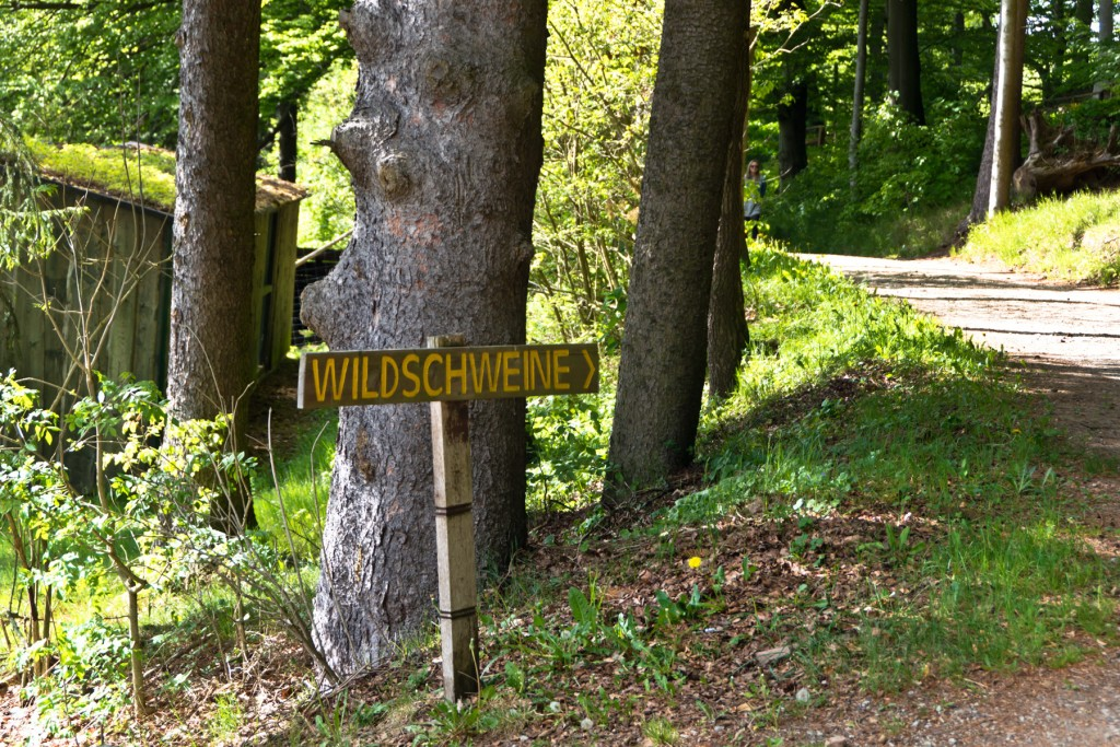 Wildpark-Gersfeld-24