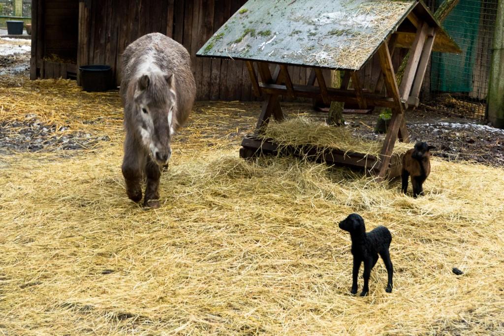 Tierpark-Fulda-06