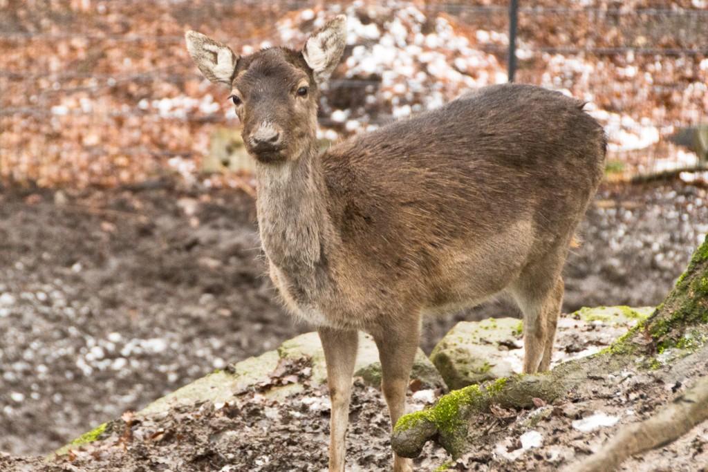 Tierpark-Fulda-18