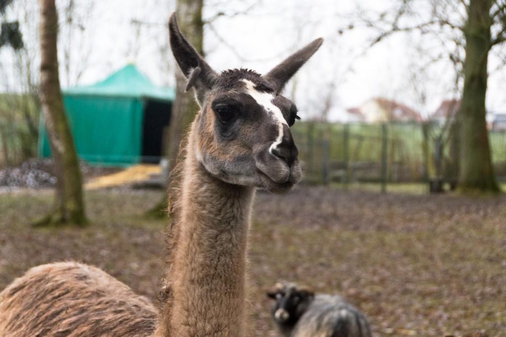 Tierpark-Fulda-21