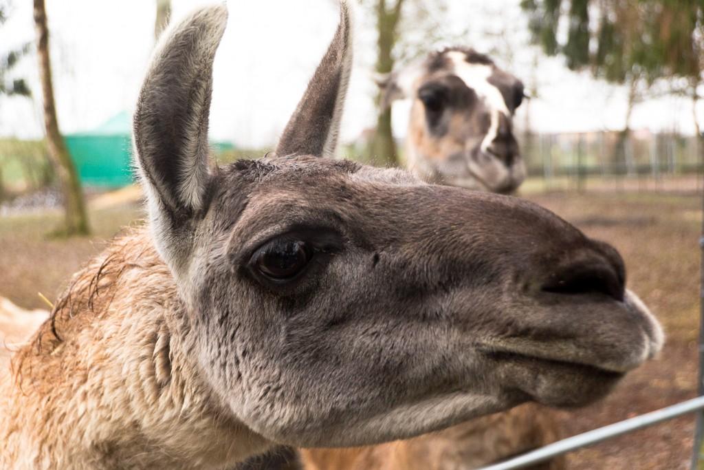 Tierpark-Fulda-26