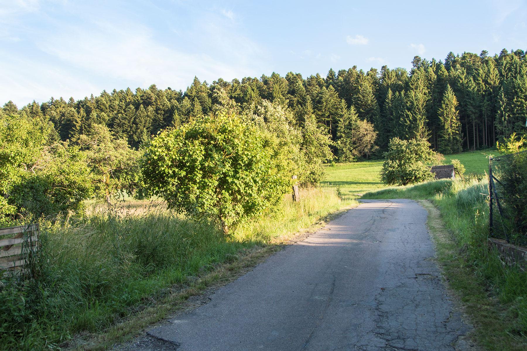 Urlaub-Schwarzwald-Juli-02