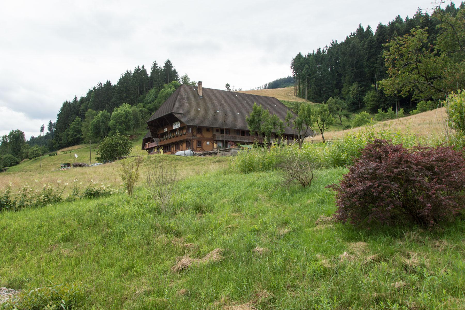 Urlaub-Schwarzwald-Juli-24