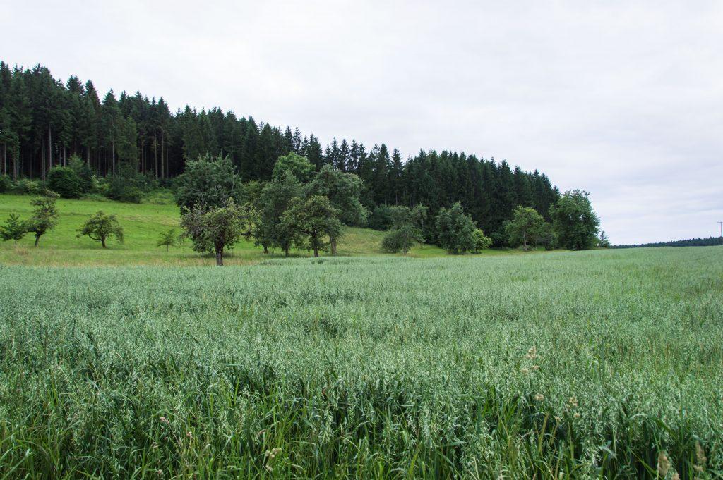 Urlaub-Schwarzwald-Juli-44