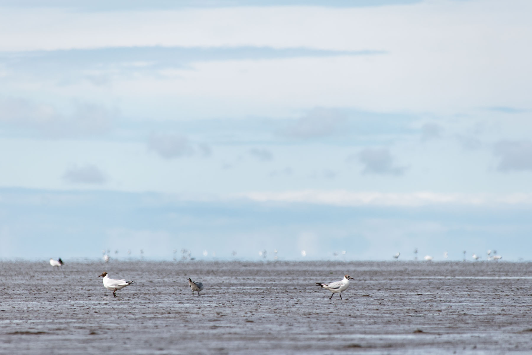 Urlaub in Greetsiel Nordsee