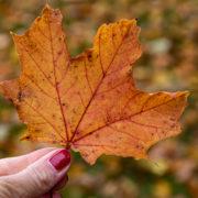 Fladungen Rhön Herbst