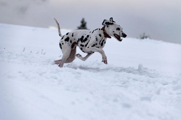 Winter Schnee Wasserkuppe Rhön Dalmatiner Linus